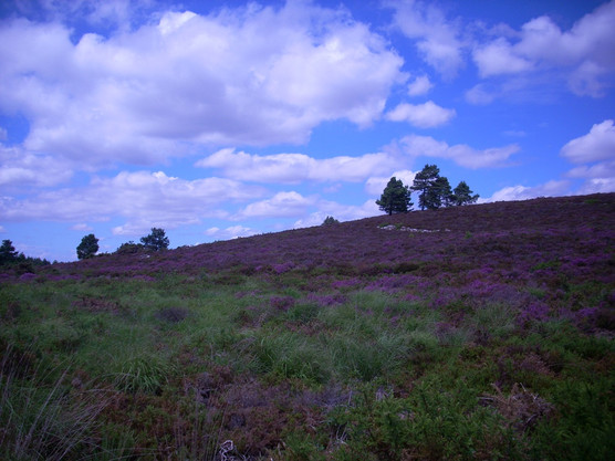 Forestry England's Forest and Heathland Project