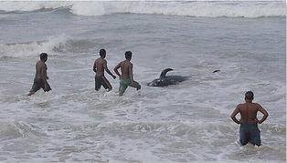 Sri_Lanka_whalesjpg_edited.jpg
