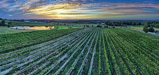 Gouveia Vineyards Sunset