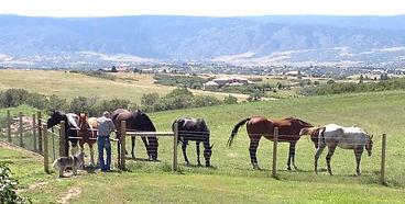 horses with man dog_edited-2.jpg