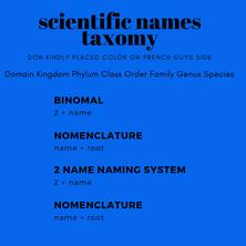 Design for scientific names taxomy