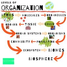 Levels of Organization for Schkeddy STEAM