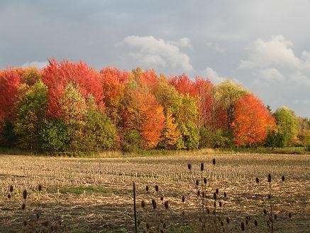 Autumn 002.jpg
