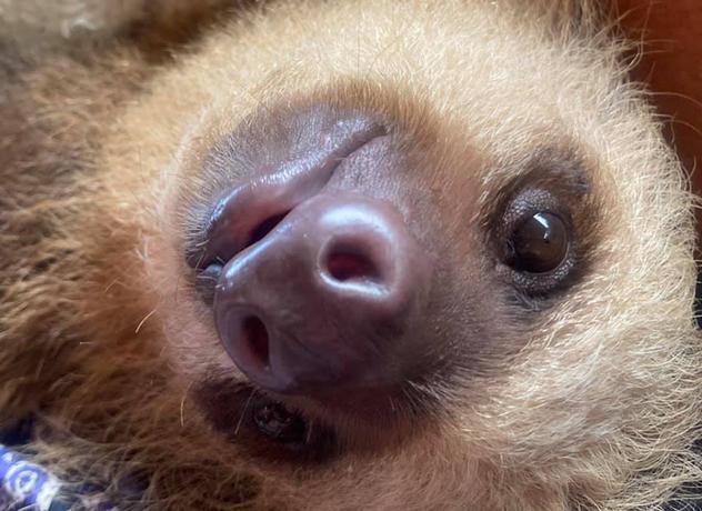 More sloths