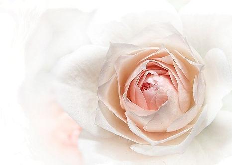 薔薇20200808①.jpg