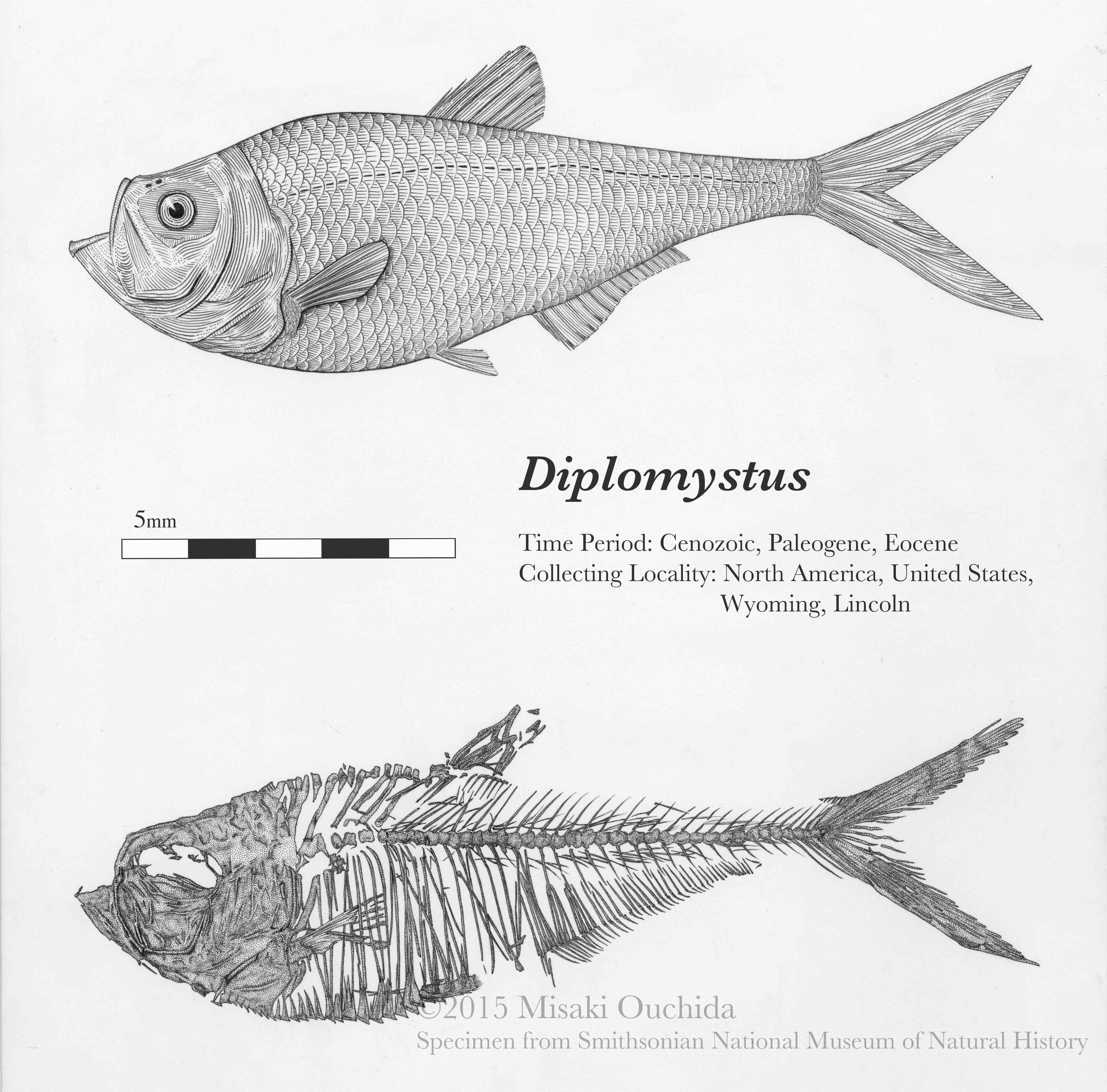 FossilRayFishWeb