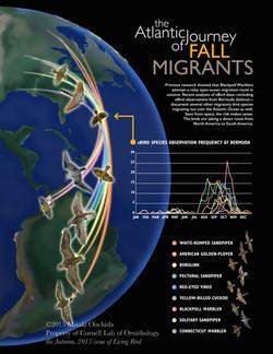 MigratingBirds
