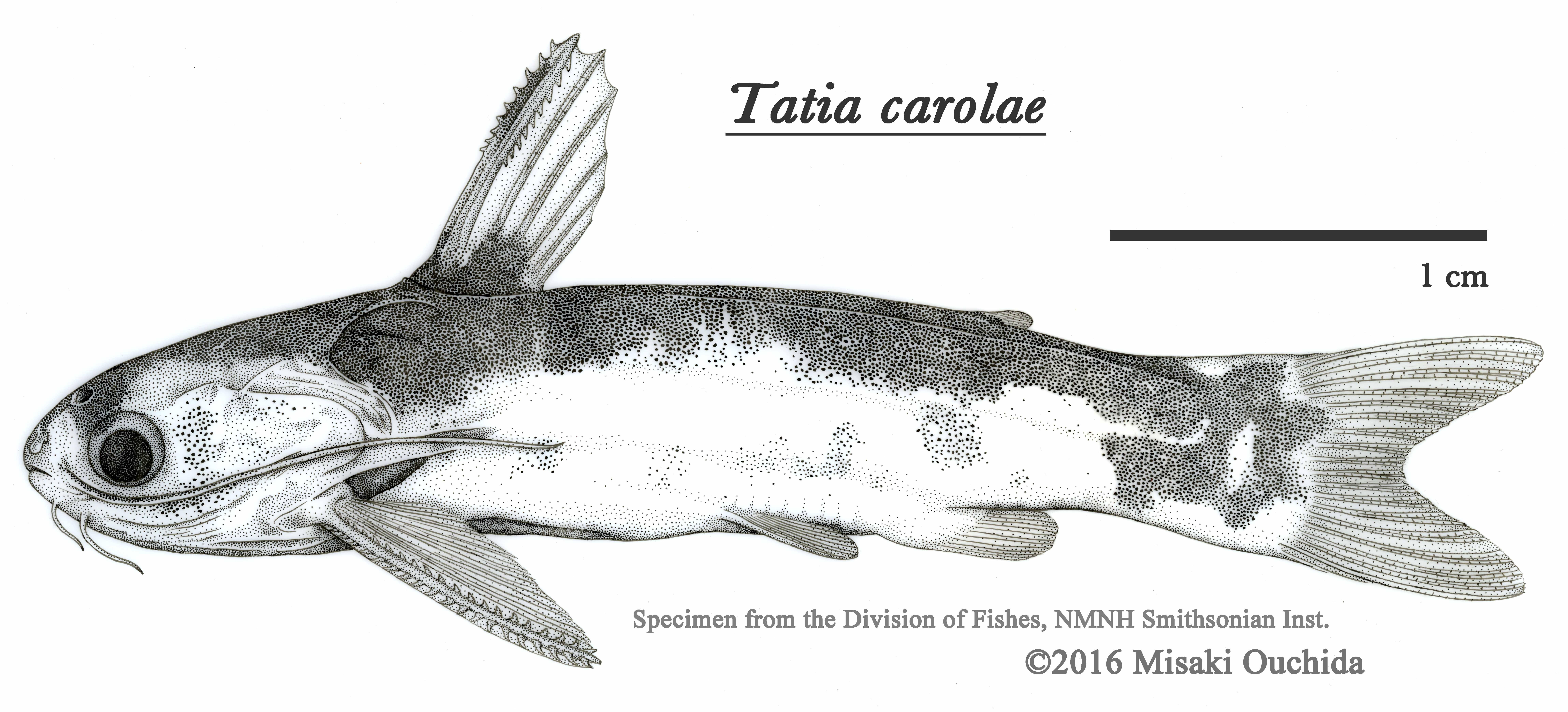 Tatiacarolae