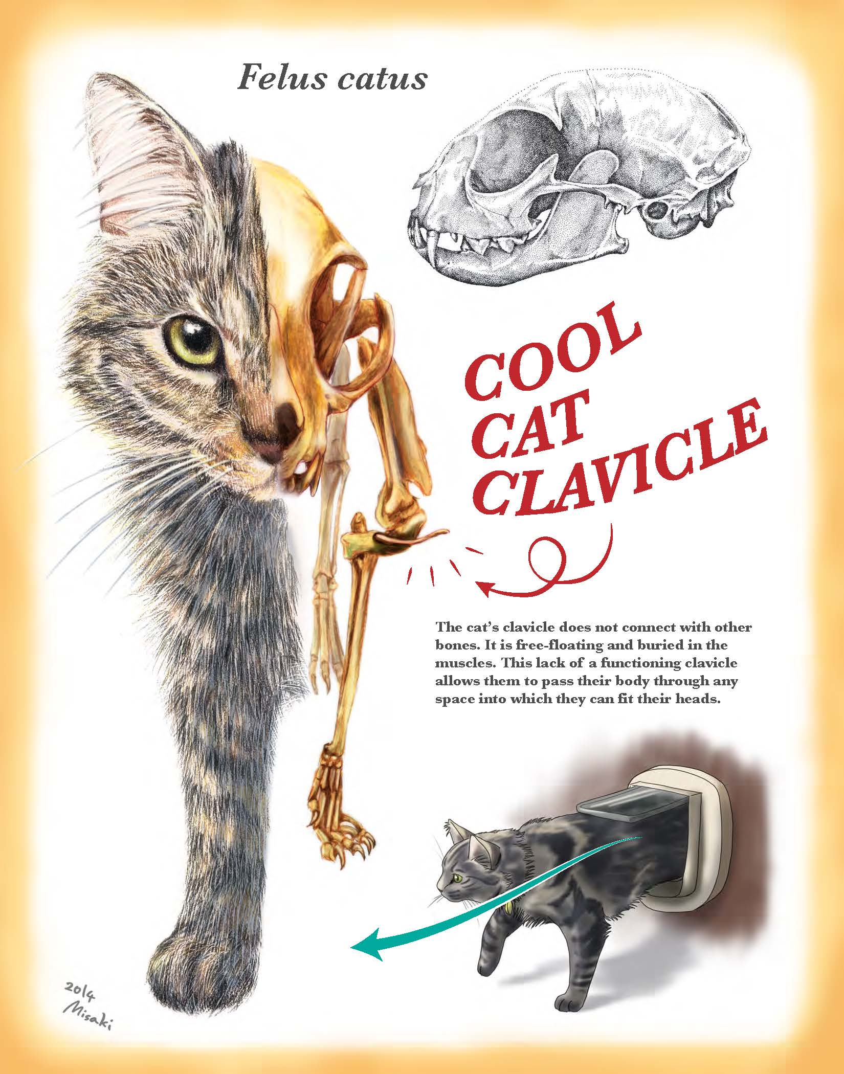 Cool Cat Clavicle