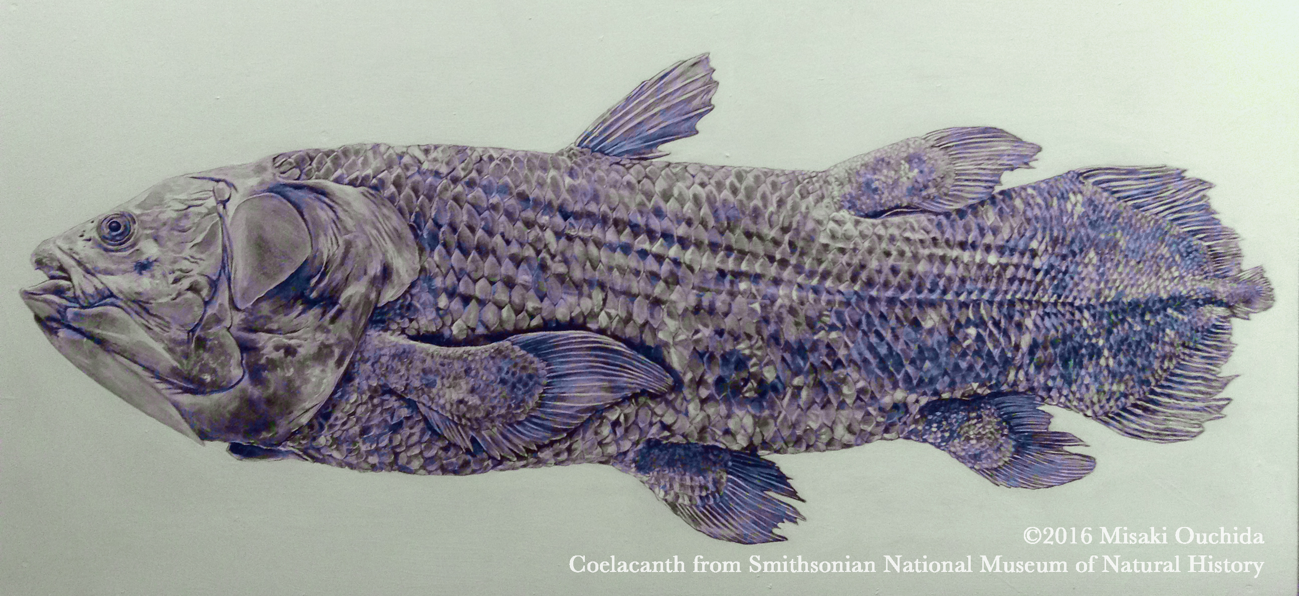 SmithCoelacanth