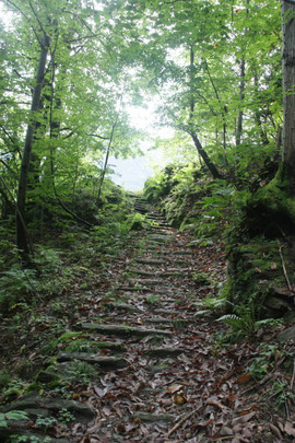A network of paths through the forest and to mountain peaks
