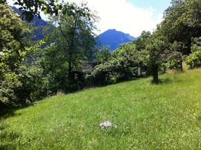 Pasture at back of Village