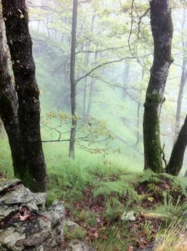 Forest around Zonca