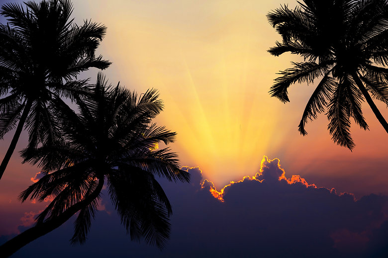 tropical-beach-sunset-with-silhouette-palm-trees.jpg