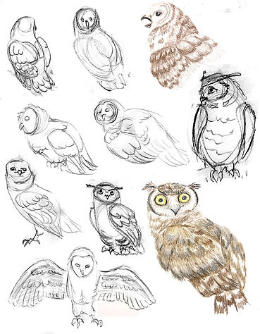 Owls_J.jpg