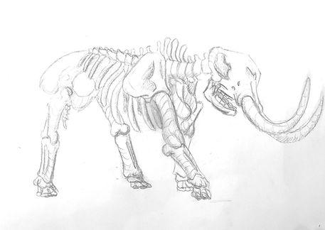 Elephant Bones.jpg