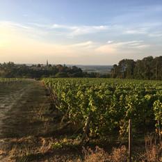 Vignobles Boudat Cigana - Paysage vigne