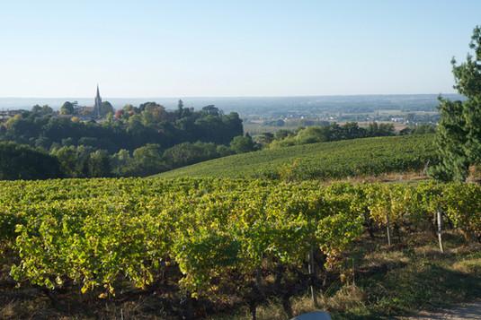 Vignobles Boudat Cigana - Vigne Sainte-Croix-du-Mont