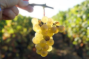 Les vignobles Boudat Cigana