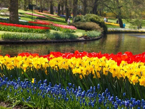 The Daffodil Principle - Jaroldeen Asplund Edwards