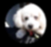 BB.Arts(ビービーアーツ)犬の絵描き作家 原田実和