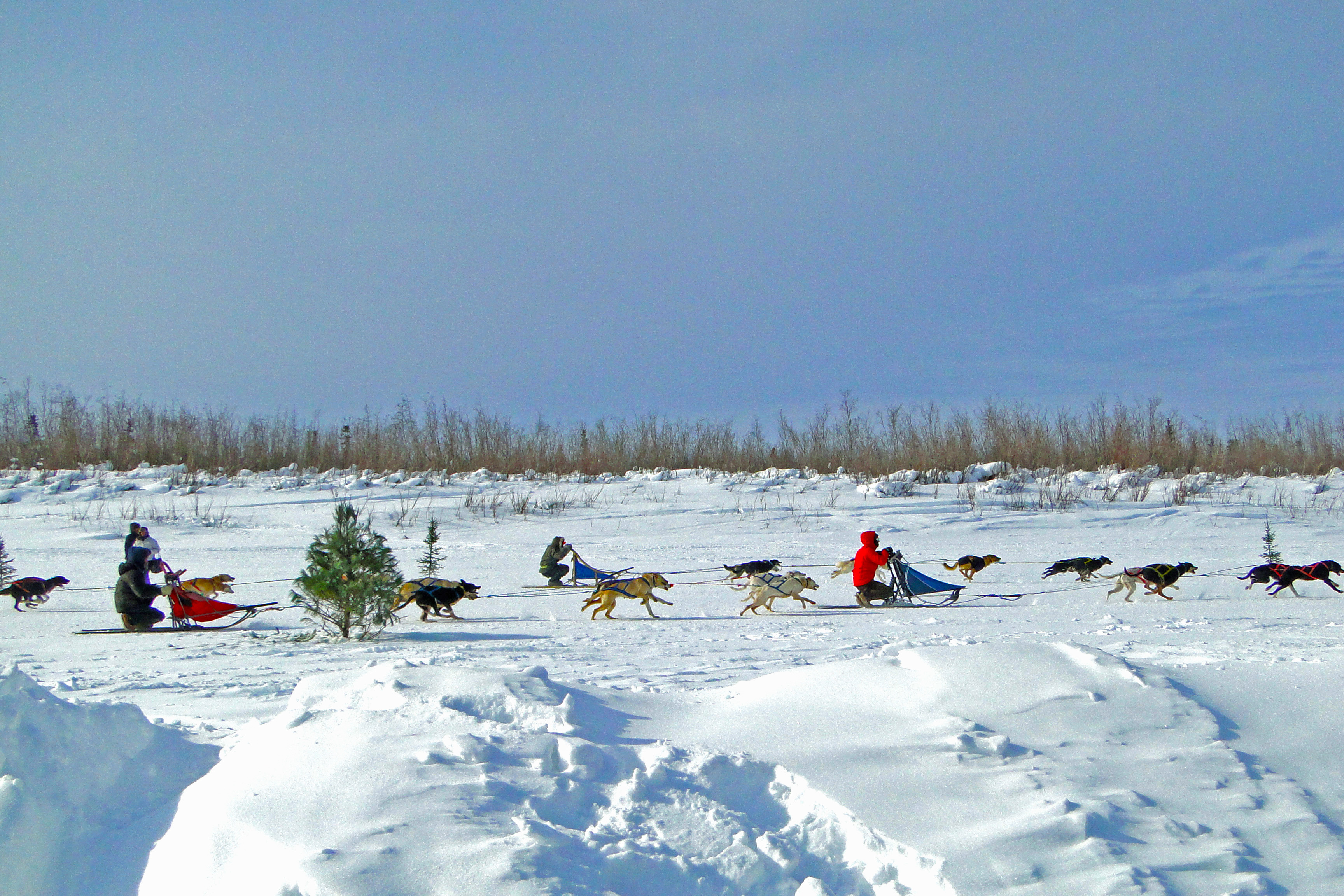 Dog Mushing Races