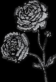 black&whiteranunculus.png