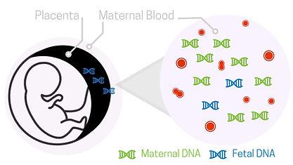 Fetal DNA .jpg