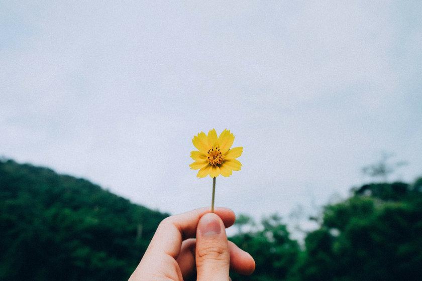 Yellow Flower kawin-harasai-2Ev2aUB8NJI-