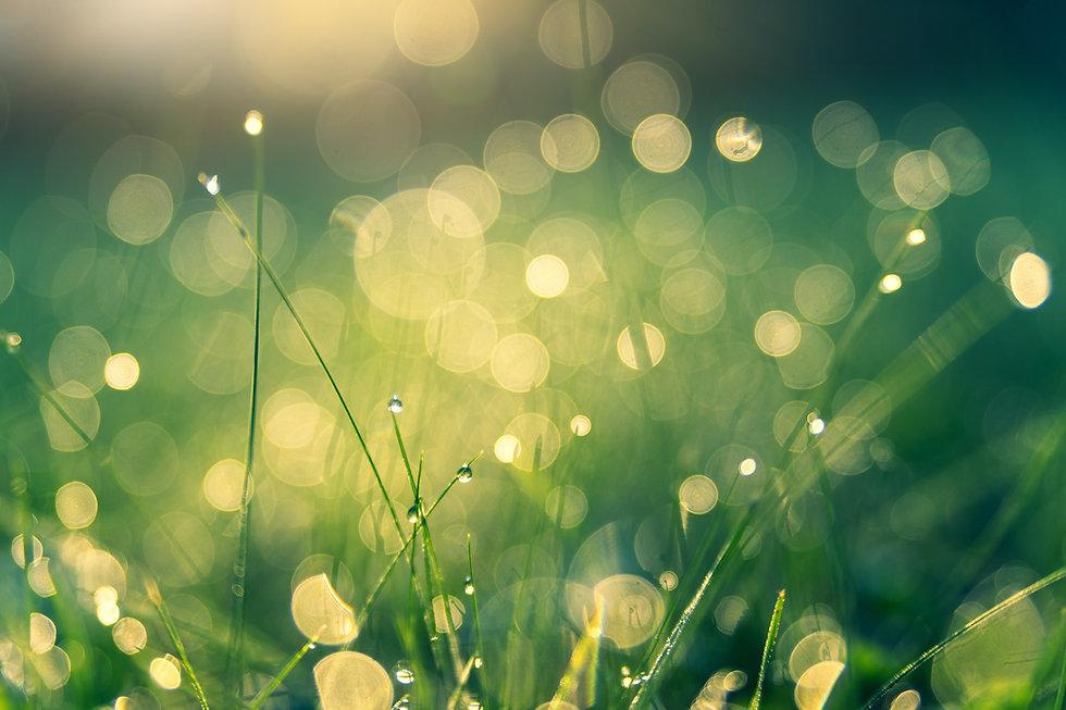 Website Dew on Grass.jpg