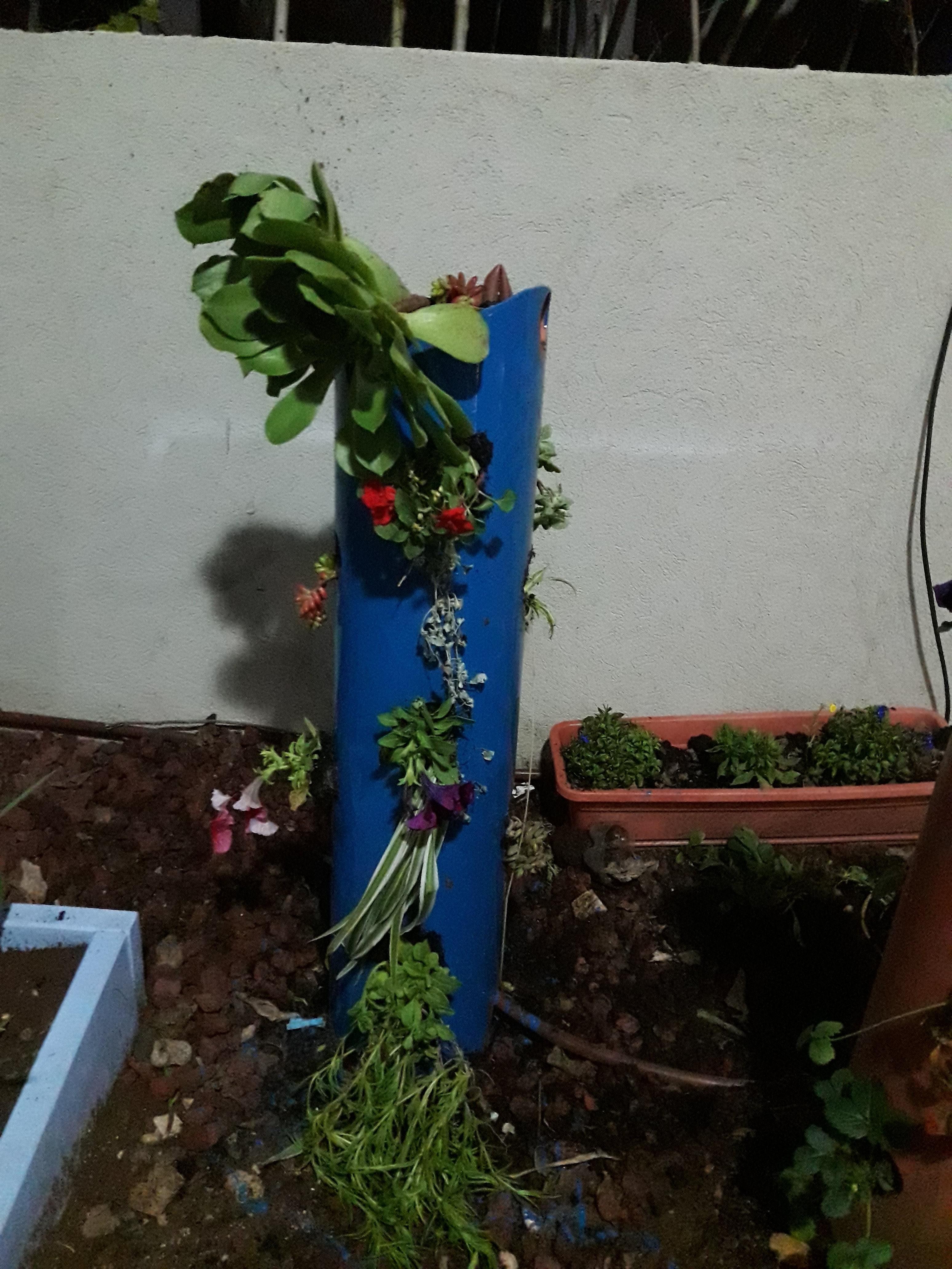 עמוד פרחים