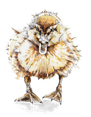 Duck Illustrations - Shouty.jpeg