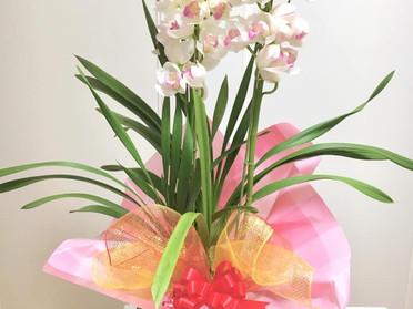 お花を頂きました✿