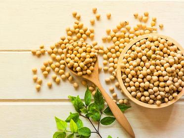 大豆製品を食べよう