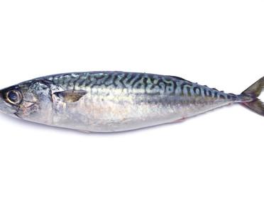 魚の脂の酸化を防ごう