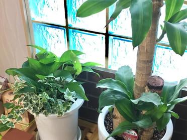 植物の植え替えをしました@本社