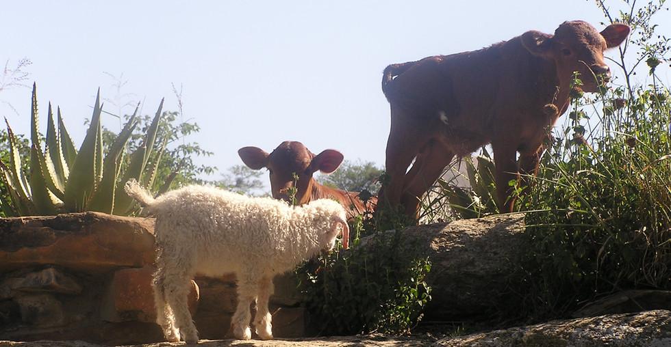die-kaia-farm-experience.jpg