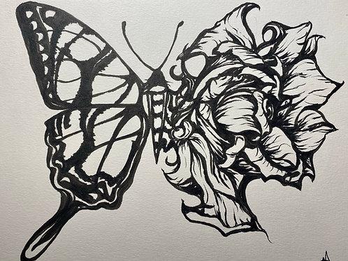 Zebra-Rose