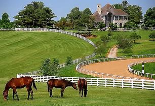 Lex_Horse_Farm.png