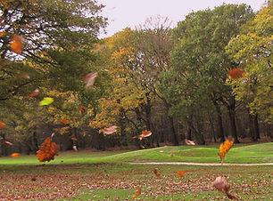 leaf-in-the-wind.jpg