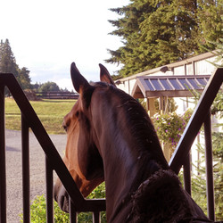 Handsome Conington loves his window
