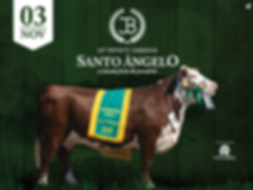 sto_angelo_banner_digital.png