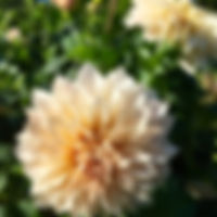 26-10-17-5240_edited.jpg