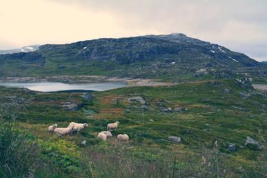 Norway VIII.'17
