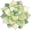 PaperSphinx_Succulents_06.png