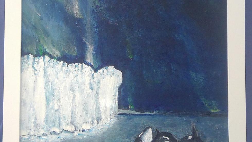 Orca Borealis