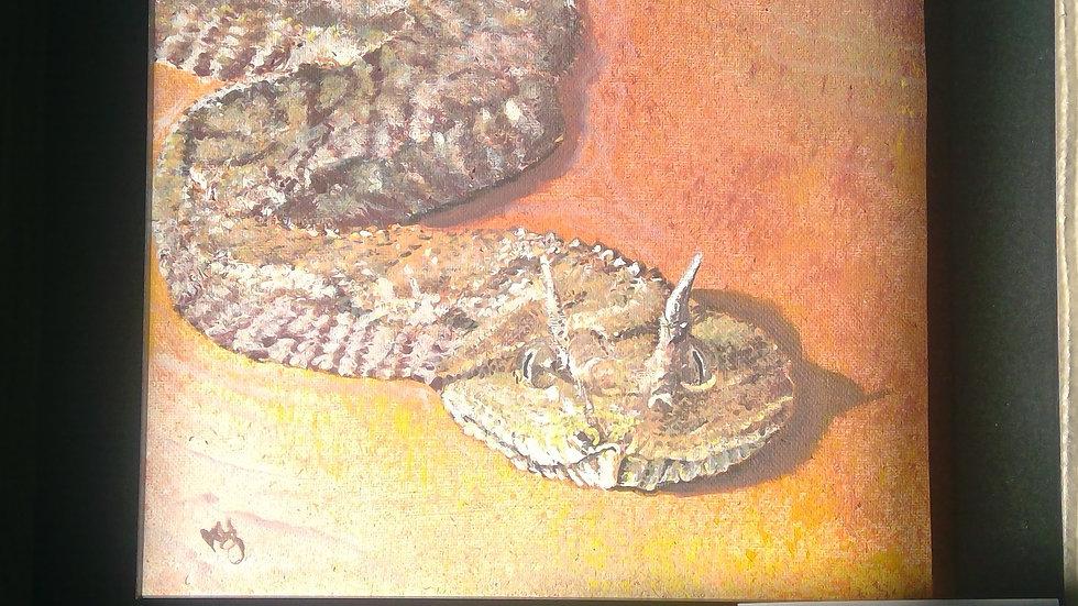 Saharan Horned Viper Snake