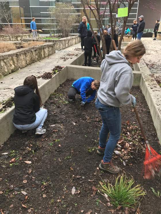 Recreating the Rain Garden