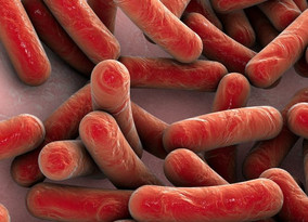 CFF Funding Will Further ContraFect's Research Into Alternative for Antibiotics