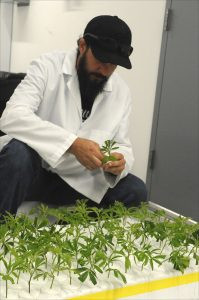 Michael Castleman examines baby marijuana plants.